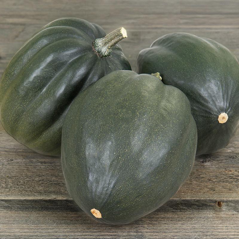 Acorn Squash Green Tangerine F1 Cucurbita Pepo De Bolster Organic Seeds