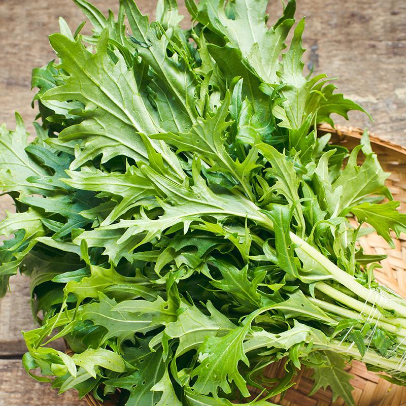 Oriental Japanese Green Mizuna 500 Seeds